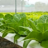 Your All-Important Guide to the Good Pests that can Actually Help Your Hydroponics Setup