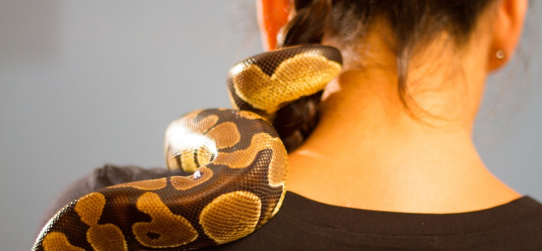 Things you need to know before becoming a pet snake owner